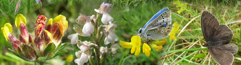 Collage of wildflowers and butterflies