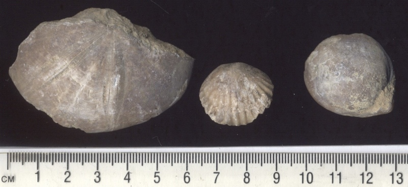 Fossils from the locality of Minchinhampton